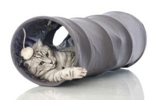 Kattenvoer online